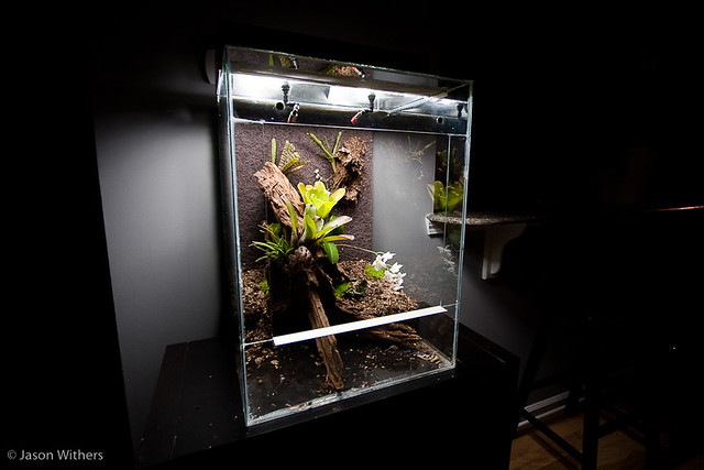 Initial Planting by jasonwithers on Flickr & Custom Vivarium Build Log Pezcame.Com