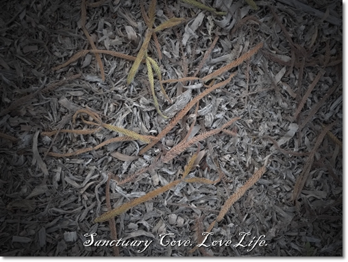 Sanctuary Cove - Love Life