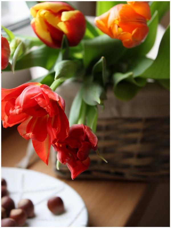 tulipe love