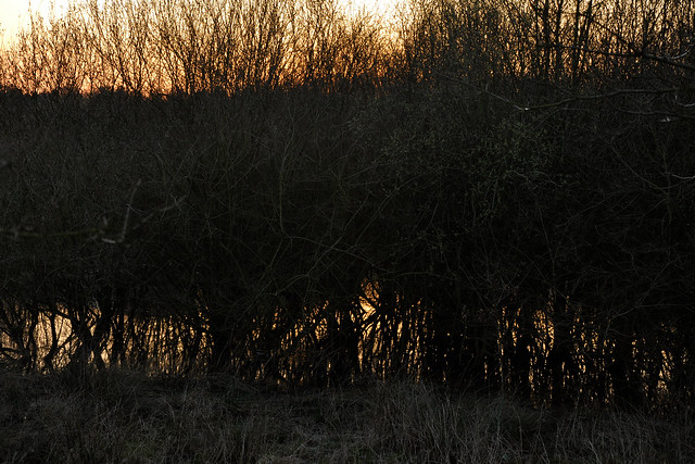 bushes and pond at sunset