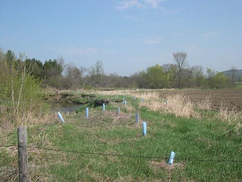 Riparian Zone Restoration