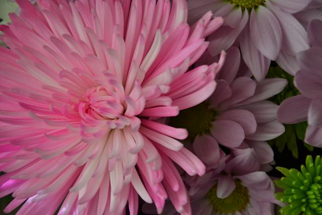 Flowers SOOC2
