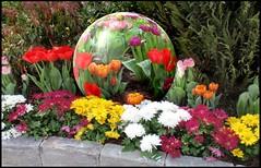 Tulip globe in garden (edenseekr) Tags: globe tulip digitalartwork