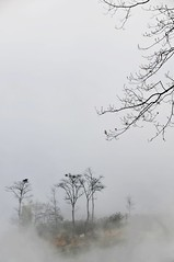 Trees (Melinda ^..^) Tags: china morning trees cloud plant fog terrace mel melinda yunnan yuanyang paintinglike    chanmelmel