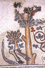 2011-02-06 (Giåm) Tags: mosaic mosaique madaba archaeologicalpark parcarcheologique