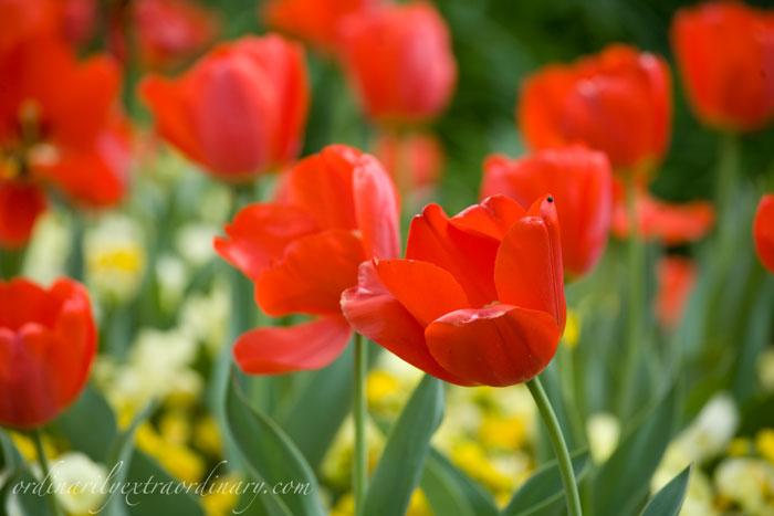 Spring_032611_0009web