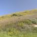 Portuguese Bend Reserve