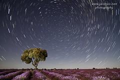 Noche briocense (javiruiz) Tags: lavanda brihuega circumpolar star espliego estrellas noche nocturna nightphotography javierruizherrera startrail