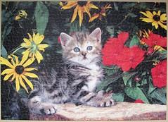 Poesy Prowler (Leonisha) Tags: puzzle jigsawpuzzle cat chat katze ktzchen kitten flowers blumen