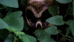 Jungle Visitor (danielledufour430) Tags: halloween october seasonal skull wood scary spooky plant foliage green forest eyes sockets eyesockets face hidden dark spy tribal
