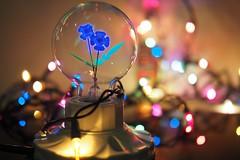 Blue FlowerOlympus 25mm f1.2 PRO () Tags: olympus penf 25mm f12 pro 2512pro   flower   light