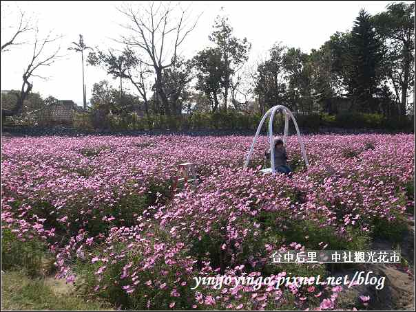 台中后里_中社光觀花市20110130_R0017633