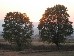 025 (Yazed Lord) Tags: trees sunset shadow tree kamshet shelar
