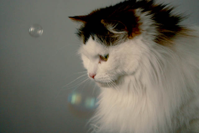 lou lou bubbles h