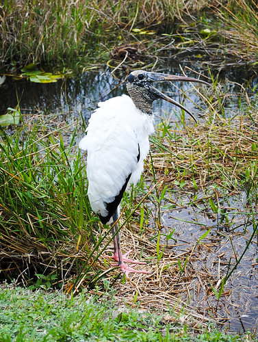 2011 02 06 Everglades-4