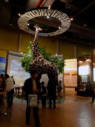 Tanzania's Giraffe
