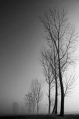 come dal nulla (mat56.) Tags: trees monochrome misty fog alberi river monocromo landscapes fiume campagna nothing antonio nebbia paesaggi lombardia lodi pianura nulla lambro lodigiano padana mat56 romei livraga mygearandme cademazzi artistoftheyearlevel2