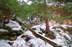 Cerulean Gorge (DMarcumPhotography) Tags: winter ohio ice creek forest frozen woods stream valley hemlock mesopotamia