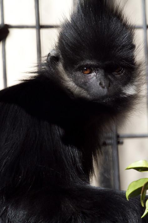 020611_zoo_animal03