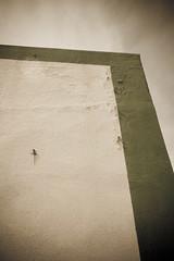 Lucertolavalucertolavitastava (Raffaello Lamonaca) Tags: summer house muro wall climb casa estate lizard sicily sicilia linosa lucertola arrampicare pelagie canoneos450d
