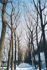 Snow (picozhang) Tags: park winter snow film beijing fujifilm       yuanmingyuan