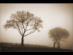 Day 3..... (Digital Diary........) Tags: trees blackandwhite bw mist fog freezing toned sthelens crank chrisconway billinge