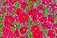 flower carpet