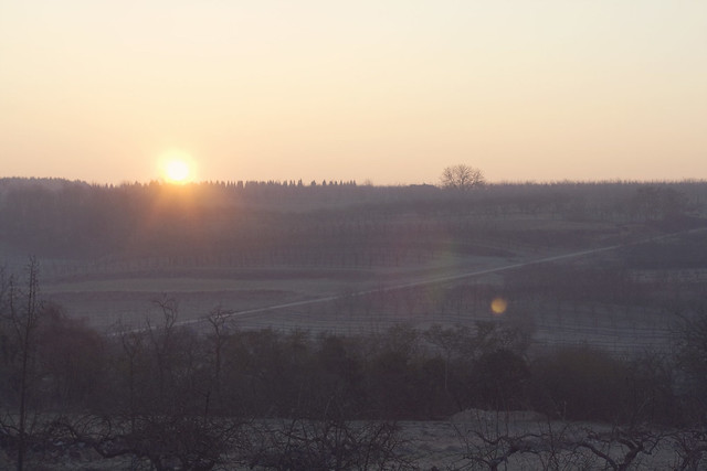 Day 51: Sunrise over the vineyard