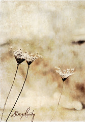 60/365 Simplicity (Pat Mark) Tags: texture weeds browns simplicity