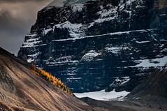 100927_JTSg_5591_f.jpg (panafoot) Tags: park canada nature landscape outdoors hiking national alberta banff larchtrees plainofsixglaciers mtdefroy