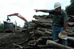 DSC_0660 (mitrataj) Tags: paper sumatra indonesia april redd acacia papermill deforestation riau pulpwood riauandalanpulppaper