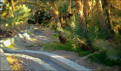 C360_2011-02-23 17-10-06 (MagicPAD - الكعبي) Tags: uae الإمارات الجزيرة الظاهر ناصر الكعبي الخطوة مصح محضة