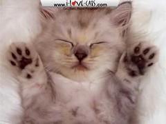 Adorable-Cats-Screensaver by KatePOI