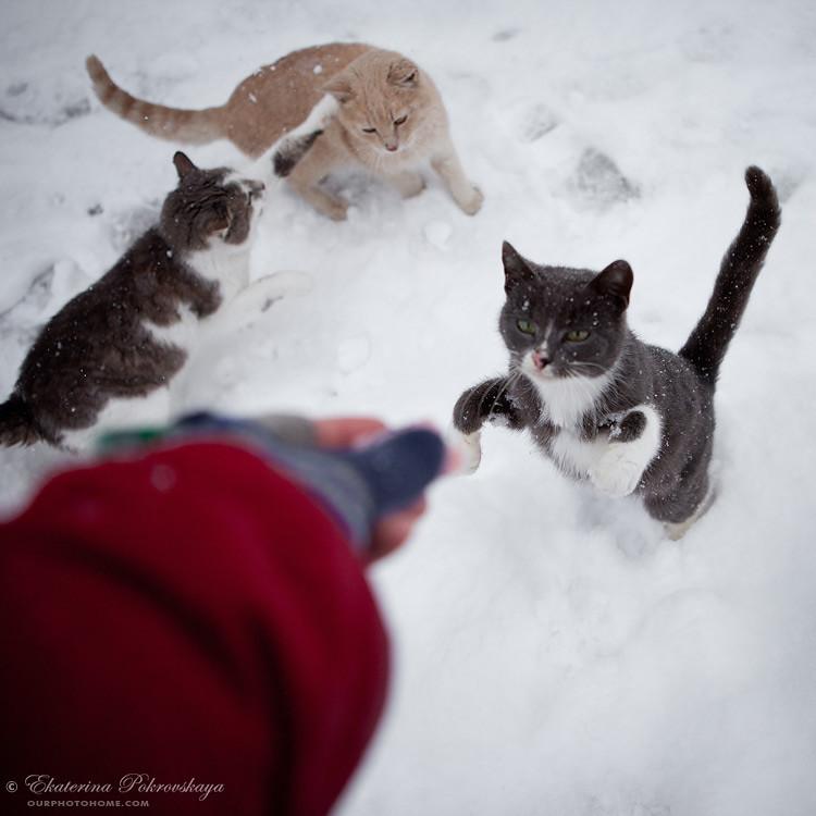 Voroncov_palace__winter_33