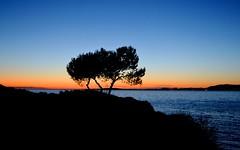 Landscape : After Sunset (pallab seth) Tags: travel winter sunset sea sky colour tree nature silhouette landscape spring spain nikon mediterranean palm traveling dslr mallorca palma majorca balearicisland platjadepalma naturesilhouettes badiadepalma nikon1855mmf3556gafsdxvr d3100 nikond3100