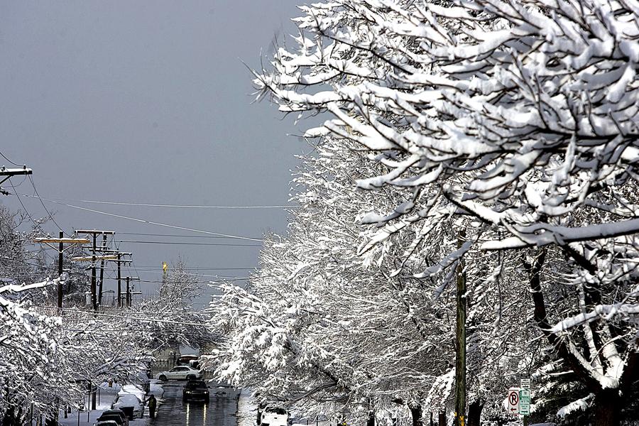 snow dg 1441