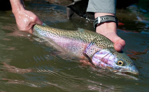 Spring Stillwater Rainbow