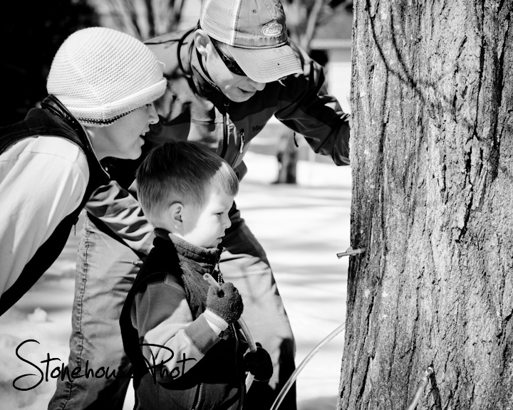 family tapping for maple syrup
