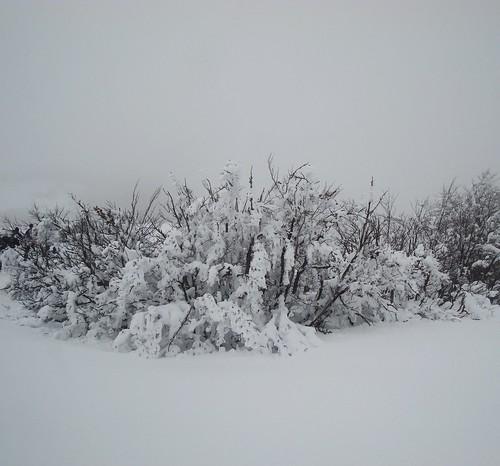 Schnee Sk 6