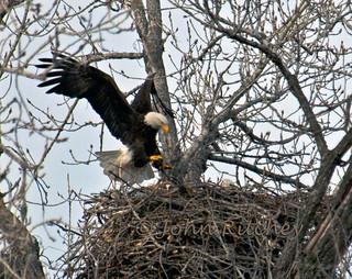 Eagle Landing
