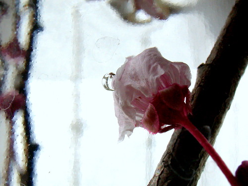 Flor submarinista o flor-pez?  / Fleur plongeuse ou fleur-poisson?