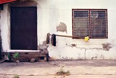 Wall with Mops, Udon Thani (Jay Kullman) Tags: film delete10 35mm thailand delete5 delete2 delete6 delete7 save3 delete3 delete delete4 save save2 save4 udonthani
