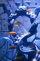 Bahamas 2011-03-04-469 (SCPstein) Tags: fish coral atlantis anemone lobster bahamas nassau lionfish hieroglyphics paradiseisland grouper saltwaterfish marineanimals paradiseislandresort clownsfishmorayeels