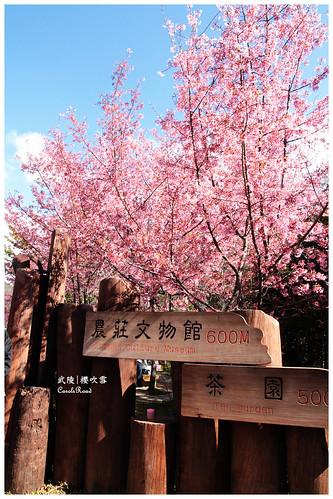 2011-03-04 陽明武陵 217 r