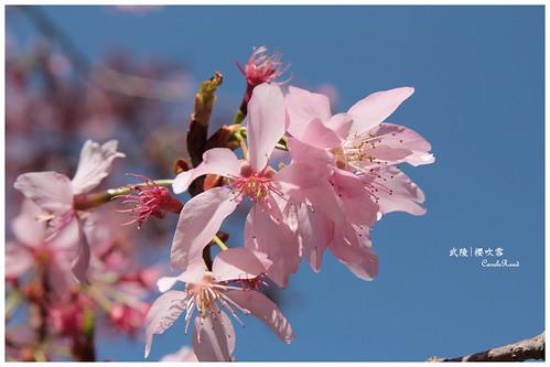 2011-03-04 陽明武陵 291 r