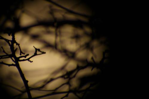 La Luna por las ramas