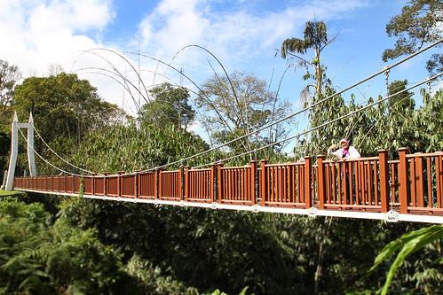 Jambatan gantung Fraser