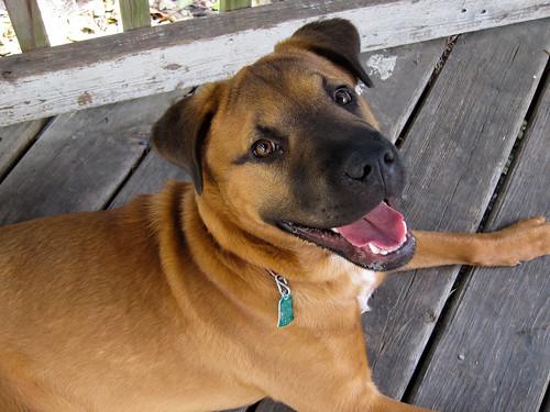 Willa the Dog