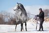 IMG_6633 (White Bear) Tags: horses horse animals russia stallion artem животные лошадь артем лошади makeev макеев производители