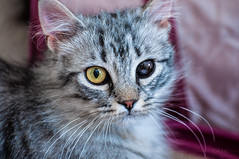 Possibilities - FFF (Light Echoes) Tags: rescue pet animal cat spring nikon katten kat feline gate chat peekaboo gato katze cath 猫 macska gatto חתול kot gat kočka kedi kass 貓 katt kissa mačka kucing 2014 mèo گربه кошка 고양이 d90 katė γάτα miv kalo pisica kaķis القط котка แมว qattus кішка बिल्ली بلی vighro